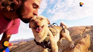Download Fearless Rescue Dog Jumps Off Cliffs With His Dad | The Dodo Video