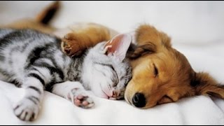 Download Top 10 Cats and Dogs best friends Video