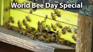 Download Honey Bee Importance and Slovenia - World Bee Day Special Video