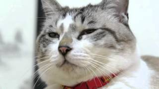 Download くろの顔 Face of a cat Video