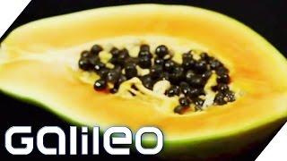 Download Food Upcycling | Galileo | ProSieben Video