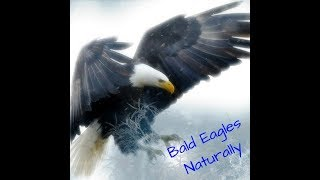 Download AEF DC EAGLE CAM 3.10.18 *BREAKING* MR. P DEFENDS THE NEST Video