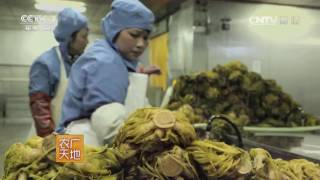 Download 20170616 农广天地 雪菜的腌制与加工 沧州冬菜 Video
