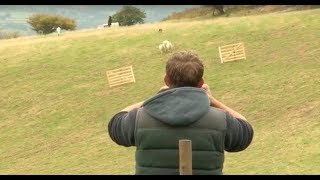 Download Sheepdog Trial - A Way with Dogs Episode 1 Video
