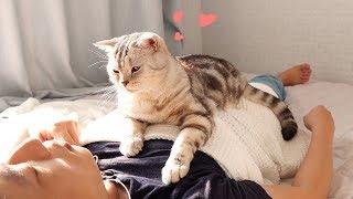Download 애교로 주인 잠 깨워주는 고양이 -심쿵- Video