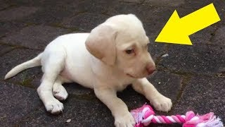 Download Evil Burglars Steal Family's Beloved Puppy Only To Realize She Has A Big Secret Video