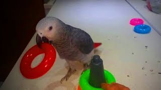 Download Cute Parrots 🐦🐦 Amazing Parrots Doing Funny Things (Full) [Funny Pets] Video
