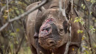 Download ENVS3150 Project: Animal Poaching in Africa Video