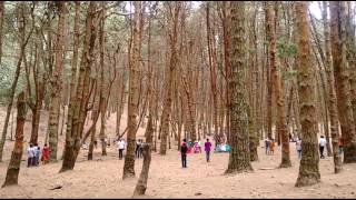 Download Kodaikanal tourist place-complete coverage | top 5 Tourist attractions in kodaikanal| Video