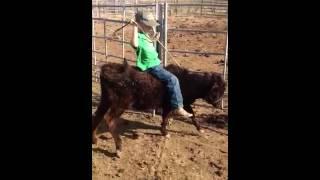 Download Jhett calf riding Video