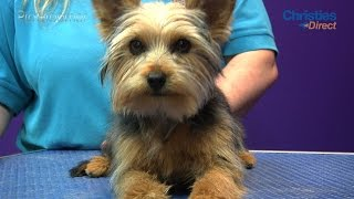 Download Grooming Guide - Yorkshire Terrier Puppy Trim - Pro Groomer Video