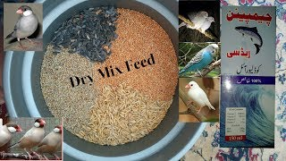 Download Dry Mix Feed For Java, Dove & Budgies Birds | Urdu/Hindi | By Lodhi Birds Video
