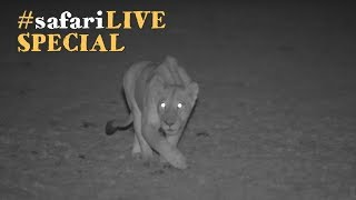 Download How the safariLIVE crew dared the darkness in the Maasai Mara. Video