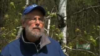 Download Trumpeter Swans Soar in Wisconsin Video
