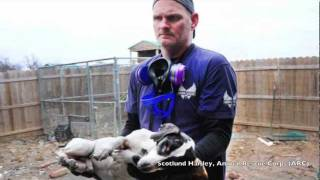 Download Agape Animal Rescue Onsite At Operation Sweethearts Video