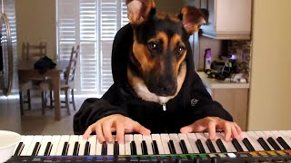 Download 16 Funny Pets Video Compilation 2016 Video