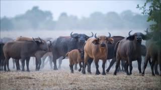 Download Zakouma National Park Safari Video