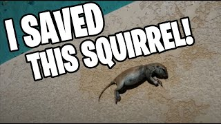 Download The day I saved a ground squirrel from drowning Video