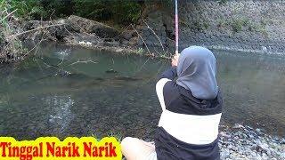 Download Gak Nyangka Ikan Nya Bakalan Ngumpul Di Tempat Seperti Ini,,Mancing Dengan istri Mantaap Video