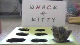 Download Whack-A-Kitty Video