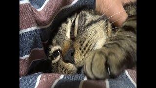 Download トロトロ解ける野良猫です Video