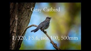Download Wildlife Photography - Episode 1 Video