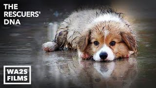 Download SCARED WET PUPPY RESCUED FROM FLOOD by Forgotten Dogs - Hope For Dogs | My DoDo Video