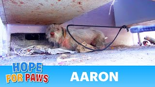 Download Hope For Paws: Homeless sick dog living under cars for 7 months - finally saved! Please share. Video