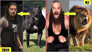 Download 20 WWE WRESTLERS Who Look Alike ANIMALS - Roman Reigns, The Rock, Braun Strowman.. [HD] Video