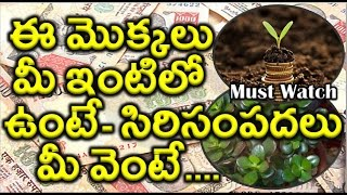Download Lucky Plants for Your Home | Must Watch | Video