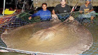 Download Top SCARIEST Fish in Lakes and Rivers Video