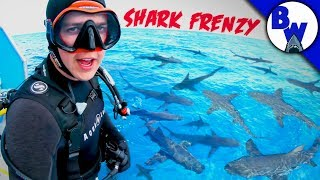Download DIVING into a SHARK FRENZY! Video