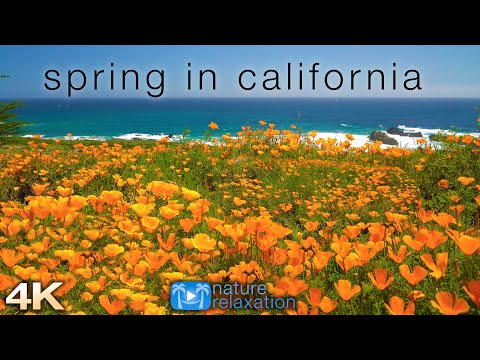 """Spring in California: 4K 1 Hour Dynamic Real-Time Ambient Nature Film + Ocean Sounds for Relaxation"