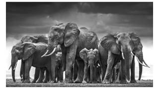 Download David Yarrow Reveals his Photography Secrets - Learn Photography Video