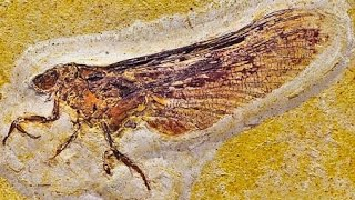 Download 12 Amazing Fossil Discoveries Video