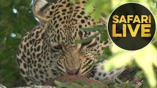 Download safariLIVE - Sunrise Safari - July 17, 2018 Video