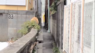 Download 野良猫の交尾の撮影に成功【成人指定】 Copulation of japanese stray cats Video