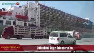 Download 20 bin ithal Angus İskenderun'da… Video