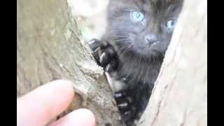 Download Hunting for feral Cats. Feral cats are not killing much of the other wildlife around my property. Video