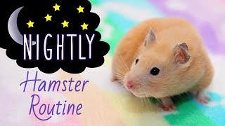 Download 🌜Nightly Hamster Routine with Kashi! (Easy Version) Video