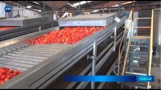 Download المكننة الفلاحية بالطارف ترفع كمية إنتاج الطماطم إلى 20 ألف طن Video