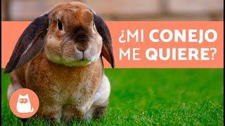Download ¿Cómo saber si mi conejo ME QUIERE? - 5 señales Video