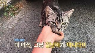 Download 출근길 갑자기 나타난 고양이! 알고보니 아메리칸 숏헤어? Video