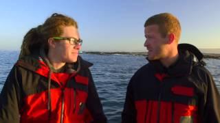 Download Sharkpocalypse Video