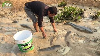 Download We Survival - Catch A Lot Of Fish In Pond Video