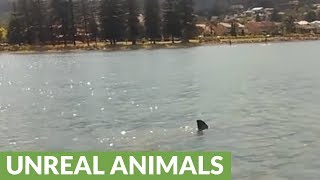 Download Family circled by Great White Shark while boating in Australia Video