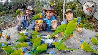 Download Parrots Crash our Picnic! - in VR180! Video