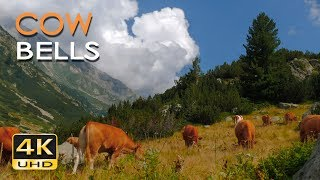 Download 4K Mountain Cows - Cowbell Sounds - Relaxing Animals & Nature Video - Ultra HD - 2160p Video