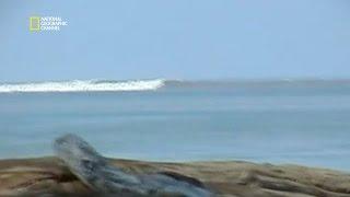 Download Le tsunami du 26 décembre 2004 - Top 100 catastrophes naturelles Video