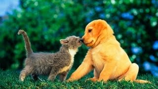 Download Puppies and Kittens Best Friends Compilation 2015 Video